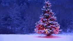 Decorated-Christmas-Tree-600x337