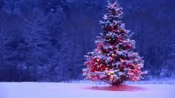 Decorated-Christmas-Tree-600x337
