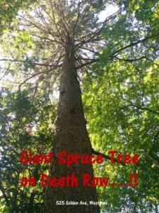 SpruceTreeDeathRow